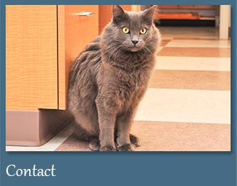 Contact Randhurst Animal Hospital