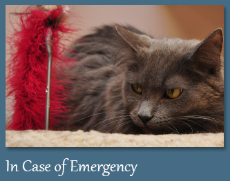 In Case of a Veterinary Emergency