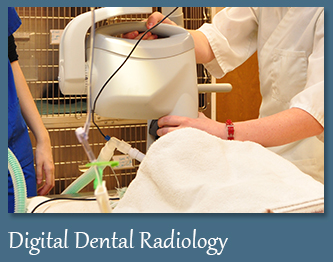Digital Dental X-Rays for Pets