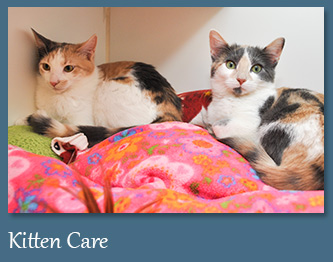 Wellness Care for Kittens