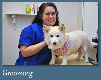 Dog & Cat Grooming in Mt. Prospect