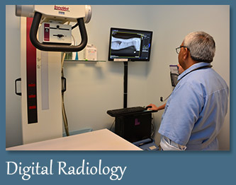 Digital Radiology Diagnostics for Pets