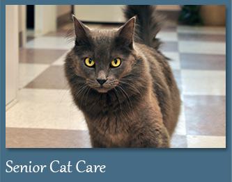 Wellness Care for Senior Cats
