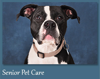 Wellness Care for Senior Dogs