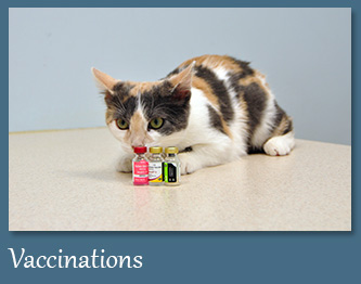 Customized Vaccines for Your Pet